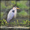 Great Blue Heron on Lily Pad