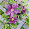 "CLEMATIS TRELLIS -- Artist: Charles MARR Size: 12"" x 16"" Medium: Watercolor Price: $300.00"