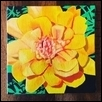 "MARIGOLD -- Artist: Sara Unrein Size: 5"" x 5"" Medium: Oil Price: $35.00"
