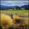 "HAY FIELD (NEW ZEALAND) -- Artist: Linda Hanley Size: 13"" x 19"" Price: $175.00"
