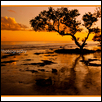 Mangrove in the Sunset
