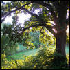 "HEALING TREE -- Artist: Rose M. Burgweger Size: 19"" x 25"" Medium: Photography Price: $250.00"