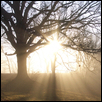 "SHINING LIFE -- Artist: Rose M. Burgweger Size: 19"" x 25"" Medium: Photography Price: $250.00"