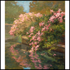 Waterside Blossoms - Loose Park