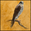 I Heard Her Wild Voice Call Me: the Kestrel