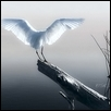 "WINGSPAN -- Artist: Carl Damico Size: 18"" x 24"" Medium: Photography Price: $340.00"