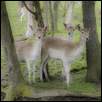 "OH DEER! -- Artist: Steve Johnston Size: 16"" x 12"" Medium: Photography Price: $200.00"