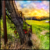 "KANSAS FARM SUNSET -- Artist: Nate Evans Size: 27.5"" x 19"" Medium: Photography Price: $180.00"