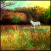 "UNICORN -- Artist: Nate Evans Size: 27.5"" x 19"" Medium: Photography Price: $60.00 ***SOLD***"