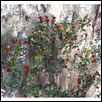 Spanish Moss and Red Flowers
