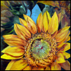 Grinter's Sunflowers III