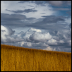Tallgrass to Sky