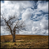 Flint Hills_One Owl Tree