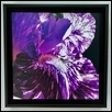 "IRIS -- Artist: Tom Hoisington Size: 13.5"" x 13.5"" Medium: Photography Price: $75.00"