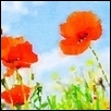 "ABSTRACT POPPIES AGAINST THE SKY -- Artist: Leah Lambart Size: 14"" x 11"" Medium: Watercolor Price: $250.00"