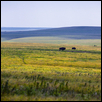 Two Buffalo Flint Hills Prairie