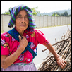 Old Guatemalan Woman Selling Kindling